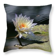 Sun Kissed Allure Throw Pillow