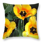 Tulips Kissed By The Sun Throw Pillow