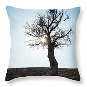 Sun Rays And Bare Lonely Tree Throw Pillow