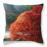 Sun Rays Over Old Japanese Maple Tree Throw Pillow
