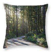 Sun Rays Through The Forest Throw Pillow