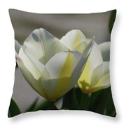 Sun Shining On A Flowering White Tulip Flower Blossom Throw Pillow