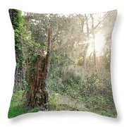 Sun Shining Through Trees In A Mysterious Forest Throw Pillow