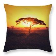 Sun Through Acacia Throw Pillow