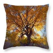 Sun Through Golden Leaves Throw Pillow