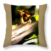 Sunbathing Butterfly Throw Pillow