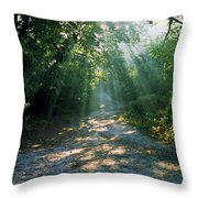 Sunbeams Through Trees Throw Pillow