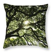 Sunburst Through Tree Throw Pillow
