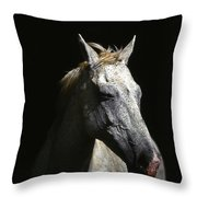 Sundance Throw Pillow