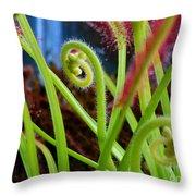 Sundew Drosera Capensis 3 Throw Pillow