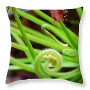 Sundew Drosera Capensis 4 Throw Pillow