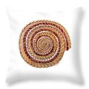 Sundial Shell Throw Pillow