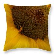 Sunflower 2015 5 Throw Pillow