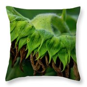 Sunflower 2017 1 Throw Pillow