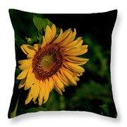 Sunflower 2017 11 Throw Pillow