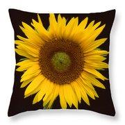 Sunflower 3 Throw Pillow