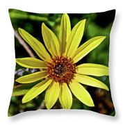 Sunflower Along Etiwanda Falls Trail In San Gabriel Mountains-california  Throw Pillow