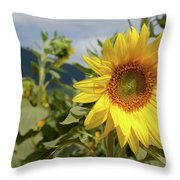 Sunflower And Peaks Of Otter Throw Pillow