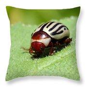 Sunflower Beetle Throw Pillow