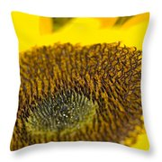 Sunflower Close-up Throw Pillow