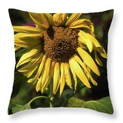 Sunflower Close Up Throw Pillow