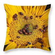 Sunflower Covered In Ladybugs Throw Pillow