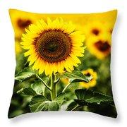 Sunflower Crops On A Farm In South Dakota Throw Pillow