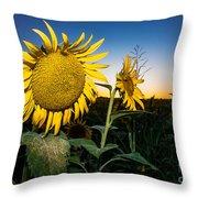 Sunflower Evening Throw Pillow