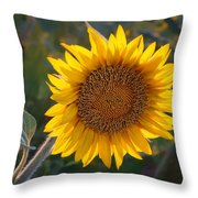 Sunflower - Facing East Throw Pillow
