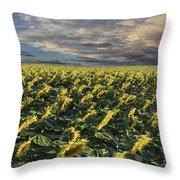 Sunflower Fields Near Denver International Airport Throw Pillow