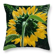 Sunflower Rear Throw Pillow