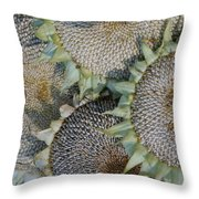 Sunflower Seed Heads Dried To Perfection Throw Pillow