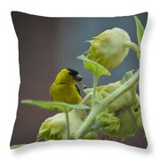 Sunflower Seed Tasting Throw Pillow