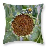 Sunflower Seedhead Throw Pillow