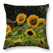 Sunflowers And Red Barn 2 Throw Pillow