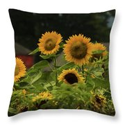 Sunflowers And Red Barn 3 Throw Pillow
