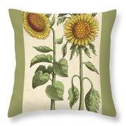 Sunflowers Illustration From Florilegium Throw Pillow