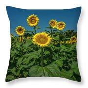 Sunflowers Weldon Spring Mo Ver1_dsc9821_16 Throw Pillow
