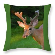 Sunkissed Buck Throw Pillow