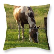 Sunkissed Tobiano Throw Pillow