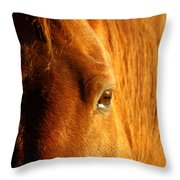 Sunlight Eyes Throw Pillow