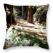 Sunlight On Path Throw Pillow