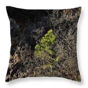 Sunlight On Pine Throw Pillow