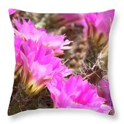 Sunlight On Pink Cactus Blooms Throw Pillow