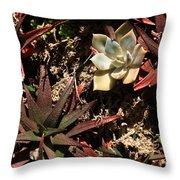 Sunlight On Succulents Throw Pillow