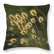 Sunlight On Wild Grasses Throw Pillow