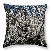 Sunlit Apricot Blossoms Throw Pillow
