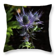 Sunlit Bloom Of Alpine Sea Holly Throw Pillow