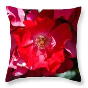 Sunlit Blooms Of Dortmund Hybrid Scots Briar Rose Throw Pillow
