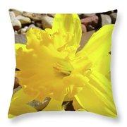 Sunlit Daffodil Flower Spring Rock Garden Baslee Troutman Throw Pillow